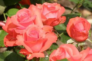 На фото розы - самый трациционный цветок в качестве подарка
